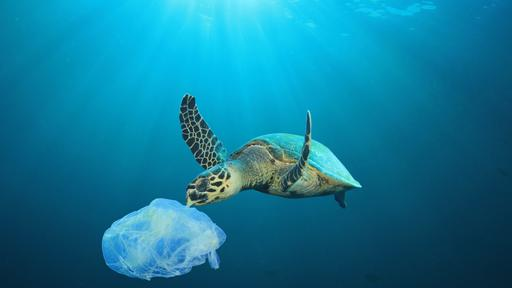 RCL take steps to eliminate Single Use Plastics